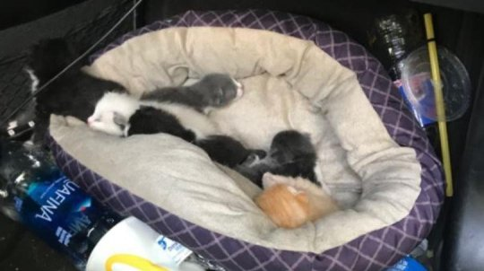 Reckless Teen Steals BMW Full of Kittens, Leads Police on a 500 Mile Long Chase